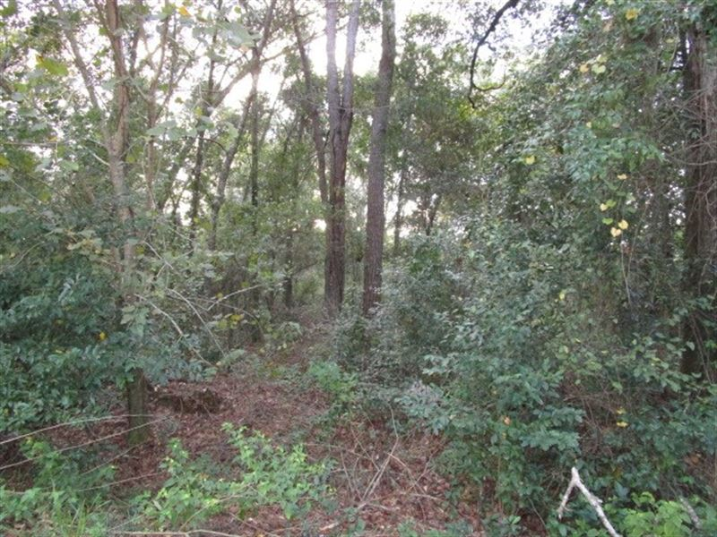 Private Lot Tallahassee FL Close to : Tallahassee : Leon County : Florida