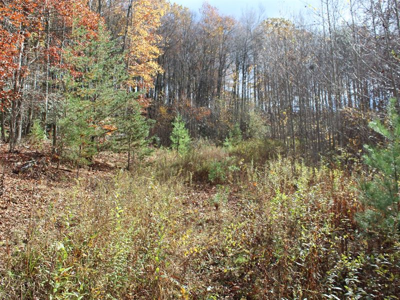 7.14 Acres Land Sell Floyd County : Meadows Of Dan : Floyd County : Virginia