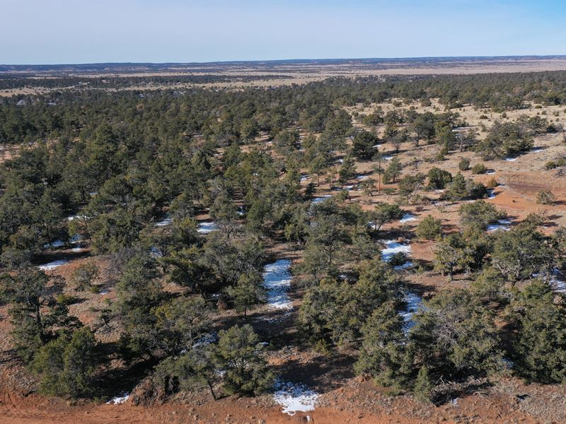 2.5 Acre Lot In Pine Meadows Ranch : Ramah : Cibola County : New Mexico