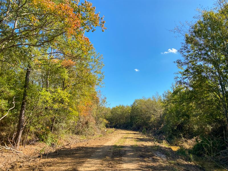 15 Acres Devers Woods Tract 27 : Devers : Liberty County : Texas