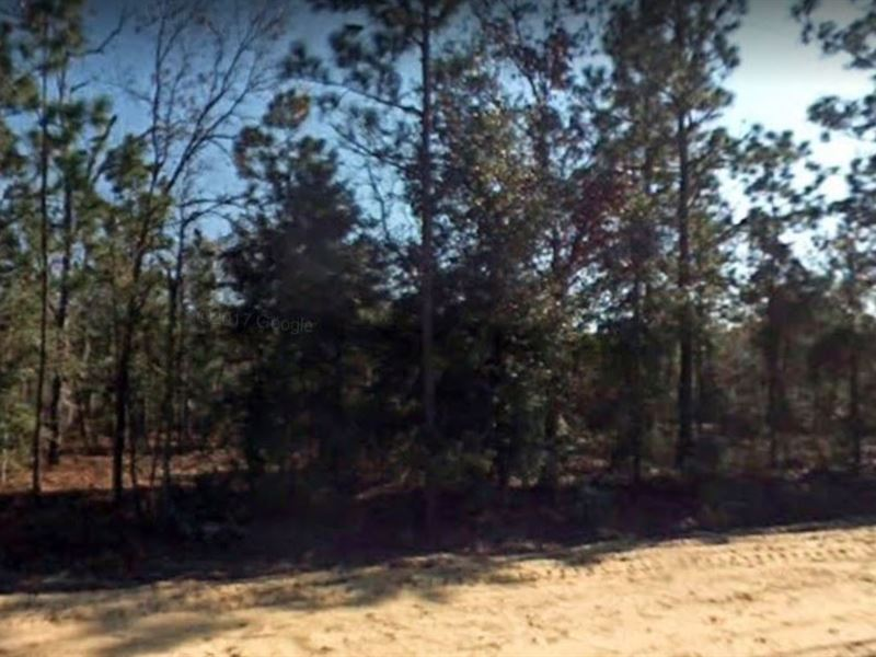 .6 Acres for Sale in Florahome, FL : Florahome : Putnam County : Florida