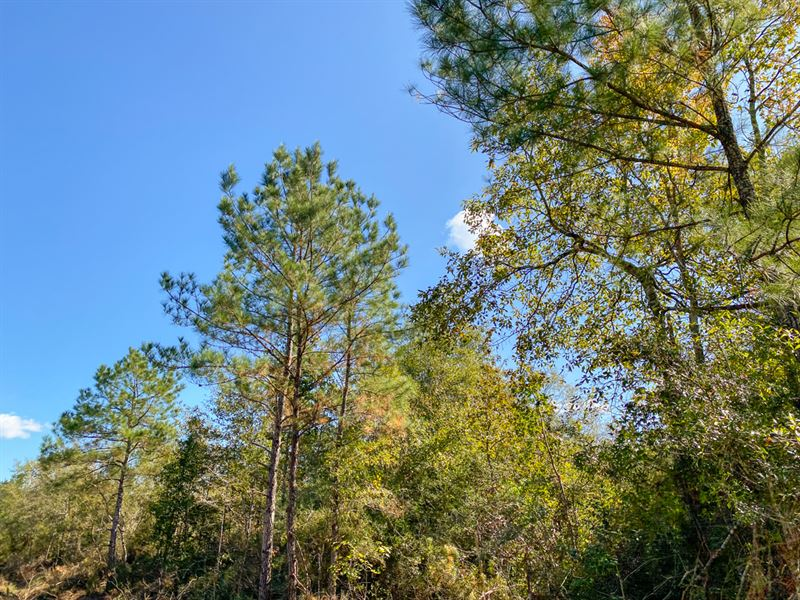 124 Acres Devers Woods Tract10 : Devers : Liberty County : Texas