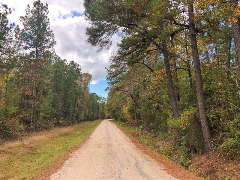 21 Acres Tract 4 Wheatfield Branch : Oakhurst : San Jacinto County : Texas
