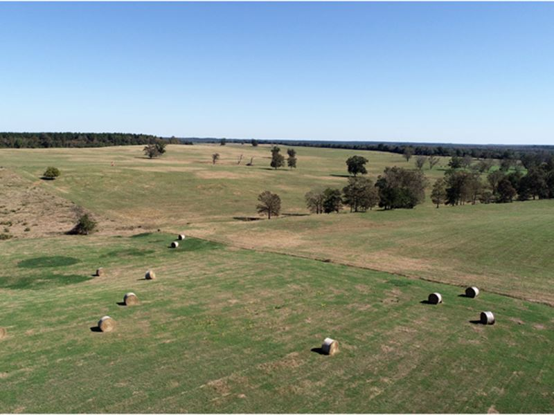 603 Acre Cattle Ranch : Keysville : Burke County : Georgia