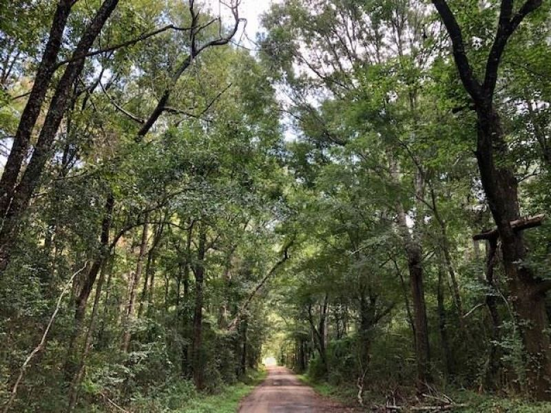 6.5 Acres Tanglewood Road In Pike : Magnolia : Pike County : Mississippi
