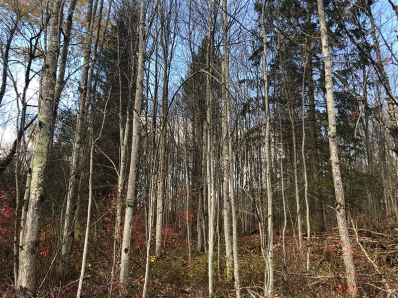 Pharsalia Forest : Norwich : Chenango County : New York