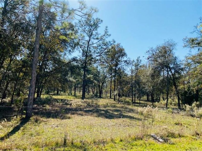 20 Acres : Bell : Gilchrist County : Florida