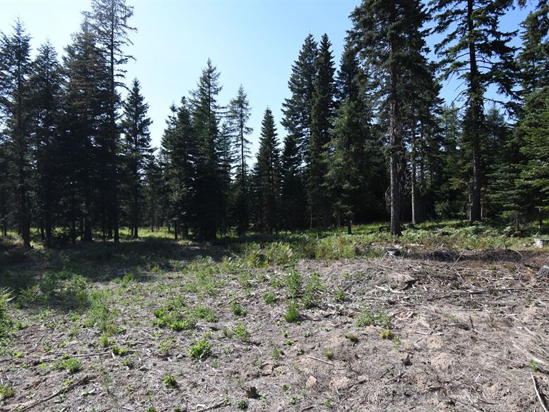 Hunting Property, Build Dream Home : Weston : Umatilla County : Oregon