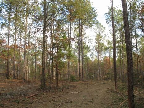 South Prong Forest- 889 Acres : Talbotton : Talbot County : Georgia