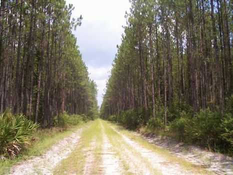 Sungarden- 870 Ac. : Florahome : Putnam County : Florida