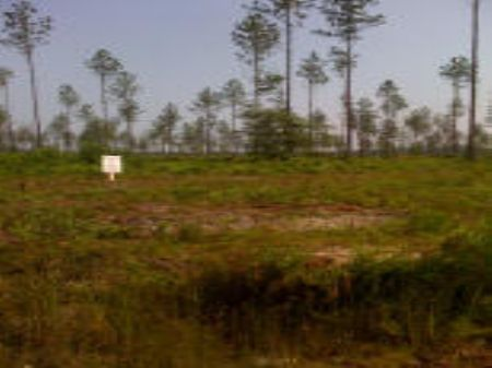 500 Acres I : Keystone Heights : Clay County : Florida