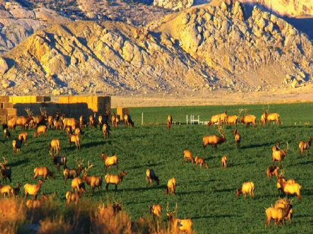 Thunder Ranch : Jensen : Uintah County : Utah