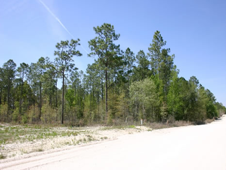 4 Acres : Lake City : Suwannee County : Florida