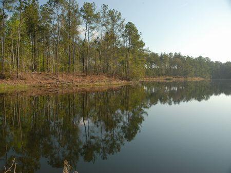 Prime Coastal Property-11,131 Ac. : Eulonia : McIntosh County : Georgia