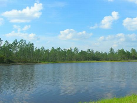 2 Acre Estate Lot Just $29,500 : Jacksonville : Duval County : Florida