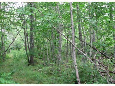 Land In Orrington : Orrington : Penobscot County : Maine