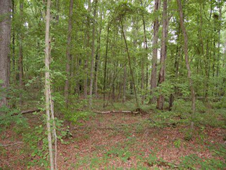 Newborn 200+ Acre Estate Tract : Newborn : Morgan County : Georgia