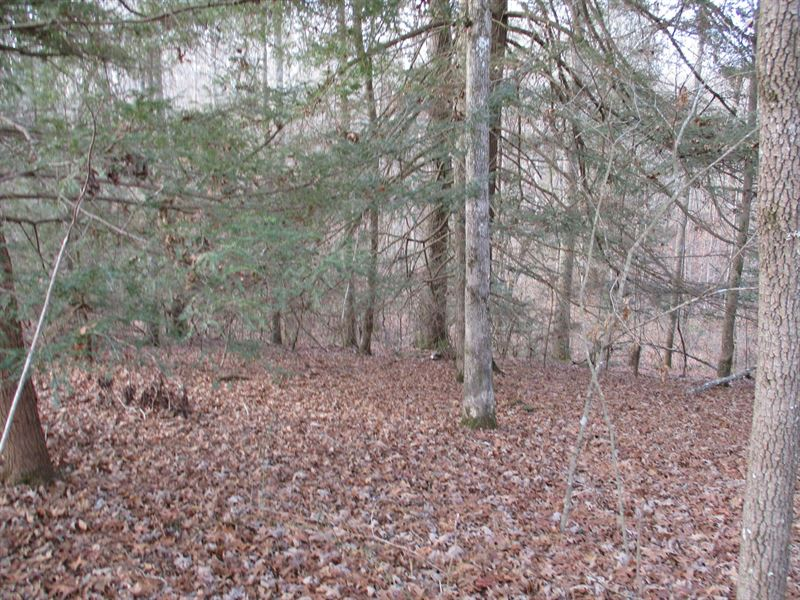 Creek, Hardwoods and Private : Pikeville : Bledsoe County : Tennessee