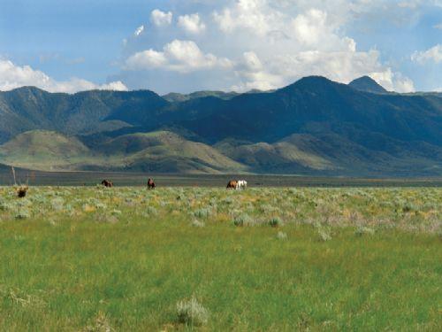 5 Acre Mountain Views : Carrizozo : Lincoln County : New Mexico