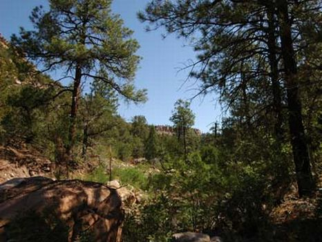 140 Acre Ranches : Wagon Mound : Harding County : New Mexico