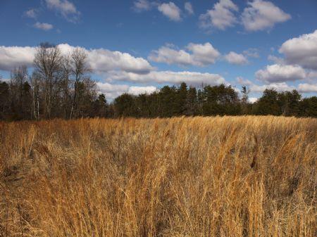 County Line Farm : Mebane : Alamance County : North Carolina