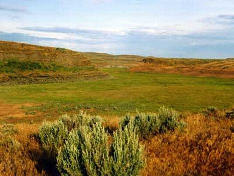 40 Acre Ranches : Moses Lake : Grant County : Washington