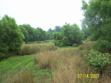 75 Acres : Crawfordville : Taliaferro County : Georgia