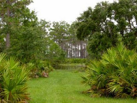 Goolsby Ranch : Sebring : Highlands County : Florida
