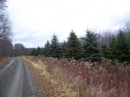 Secluded Country Building Lot : Van Etten : Chemung County : New York