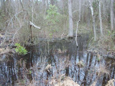25 Acres : Sumter : South Carolina