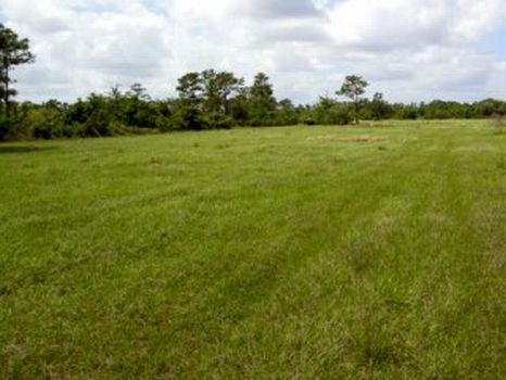 Lake Marian Lakefront : Kenansville : Osceola County : Florida