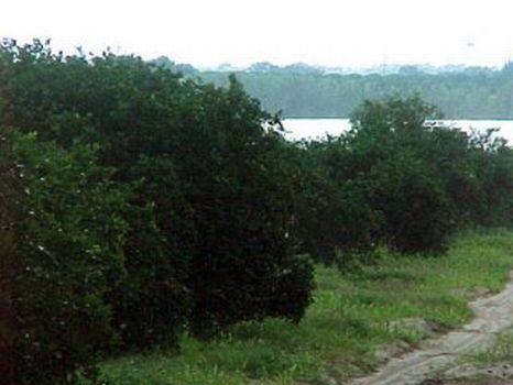 Lake Moody Development : Frostproof : Polk County : Florida