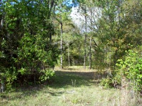 Marcum Road Property : Lakeland : Polk County : Florida