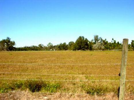 Maxwell Road - 64.34 Acres : Wauchula : Hardee County : Florida