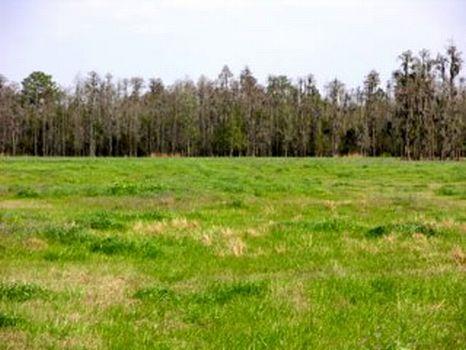 Moore Road East - 107 Acres : Lakeland : Polk County : Florida