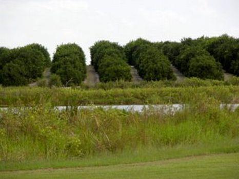 Mountain Lake Cutoff Development : Lake Wales : Polk County : Florida
