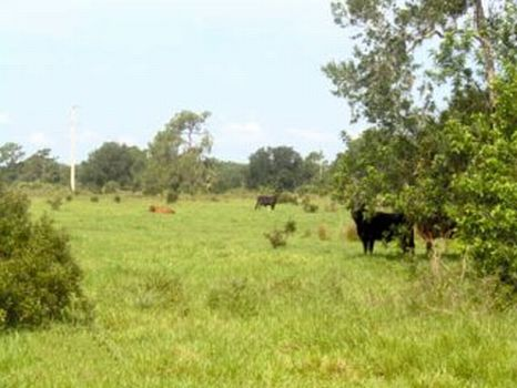 Okeechobee Ranch & Development : Okeechobee : Okeechobee County : Florida