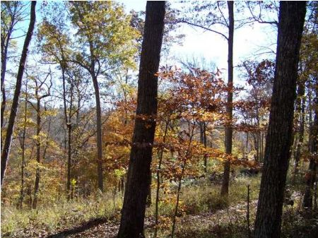 Bank Owned Waterfront Lot : Smithville : DeKalb County : Tennessee