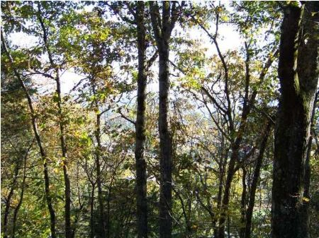 5 Acres Overlooking The Tn River : South Pittsburg : Marion County : Tennessee
