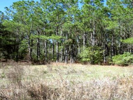 Rockridge Road 10 Acres : Lakeland : Polk County : Florida