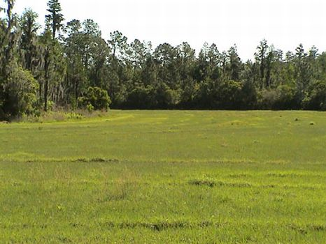 Smith Ranch : Lakeland : Polk County : Florida