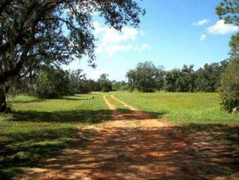 Triple Canopy : Frostproof : Polk County : Florida