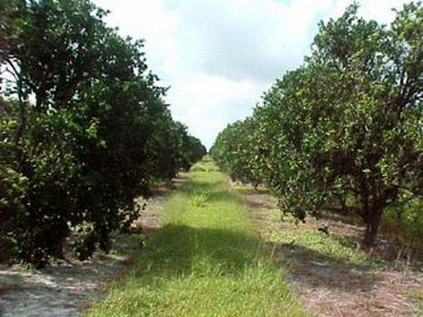 Vero 522 - Residential Development : Vero Beach : Indian River County : Florida