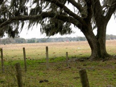 Webster Investment Property : Webster : Sumter County : Florida
