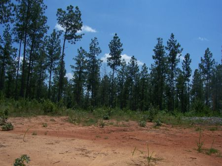 102 Wooded Acres : Buckingham : Buckingham County : Virginia
