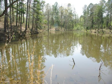 Two Lakes & 8 Acres- Two Home Sites : Moody : St. Clair County : Alabama