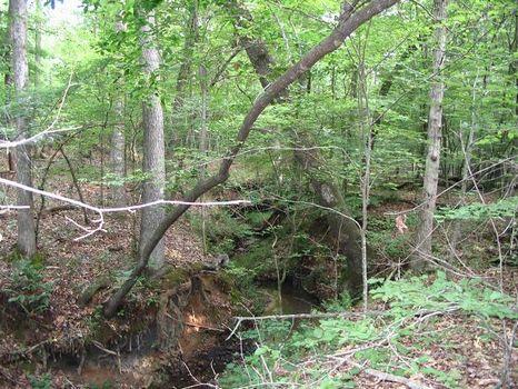 32+/- Acres Big Hardwoods : Elberton : Elbert County : Georgia