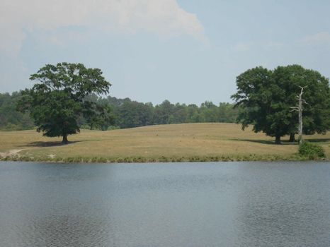 170 ac Operating Cattle Farm : Clanton : Chilton County : Alabama