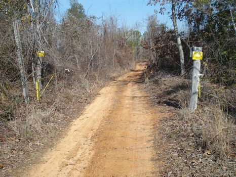 160 ac Low-Priced Hunting Property : Sulligent : Lamar County : Alabama