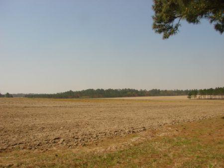 Prime Farmland : Camilla : Mitchell County : Georgia